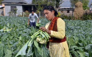 Private Sector Engagement Gender Blog