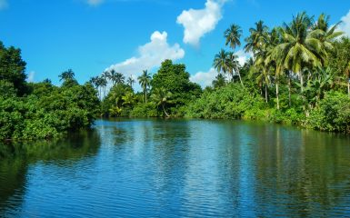 Deep blue river with tropical trees lining its shores under a bright blue sky